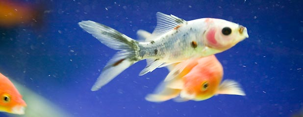 Pet supplies for Exotic fish and pets